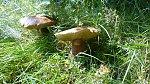 images49.fotosik.pl/1011/21d69d5c5c701ccdm.jpg