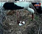 http://images49.fotosik.pl/106/f529ec610c9265dcm.jpg