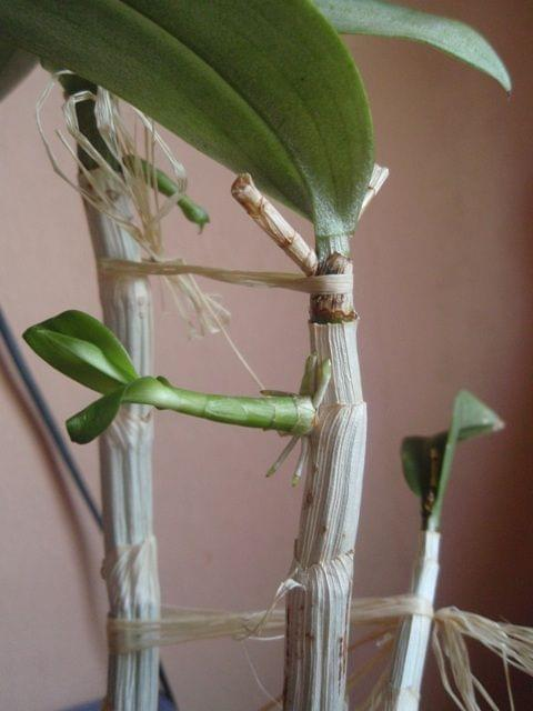 Uprawa wazonowa w keramzycie - Page 2 637ef695e8e5014c