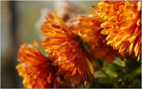 Przymrozek... #Kwiaty #makro #szron #przymrozek