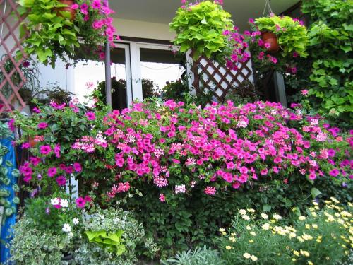 Zobacz Wątek Jakie Rośliny Na Balkon Taras Kompozycje