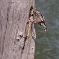 #szpak #ptaki #przyroda #natura
