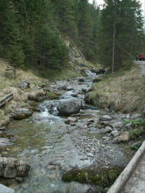 Zakopane, maj 2008 - Gdzie strumyk płynie z wolna #Góry