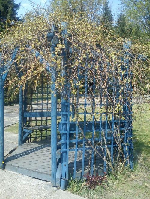 W Parku Chorzowskim