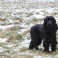 :) #boisko #Luna #łąka #pies #śnieg #zima