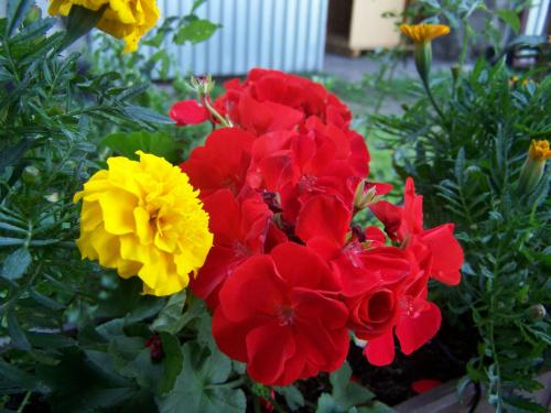 #kwiat #przyroda #roślina