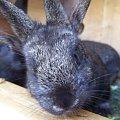 #królik #zwierzę #przyroda #roślina #kwiat #króliczek
