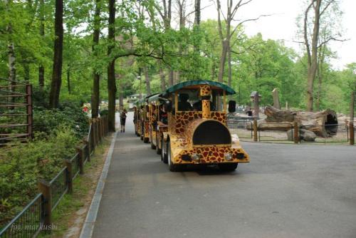 Zoo Ostrava kto zmęczony może wsiadać... #animals