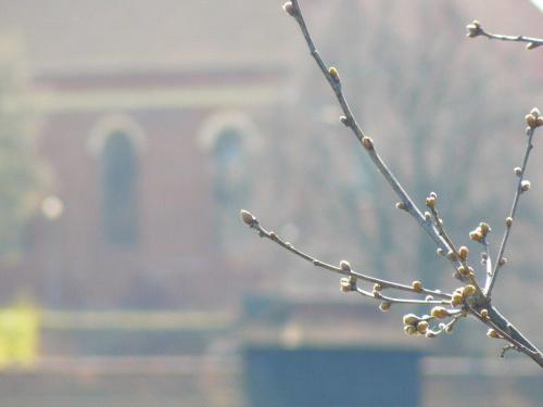 #wiosna #pączki