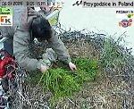 http://images49.fotosik.pl/136/564a3d268cd099d5m.jpg