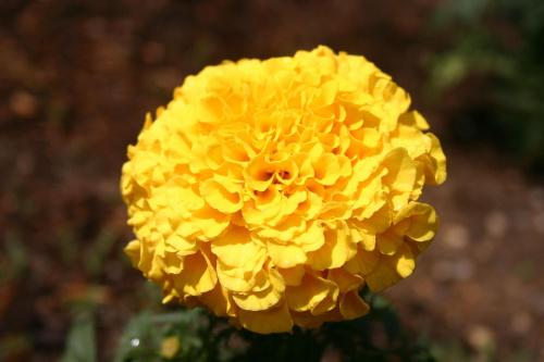 #kwiaty #kolory