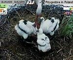 http://images49.fotosik.pl/141/79972eec6a8f3af2m.jpg