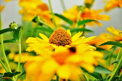 #kwiaty #ładne #makro #przyroda