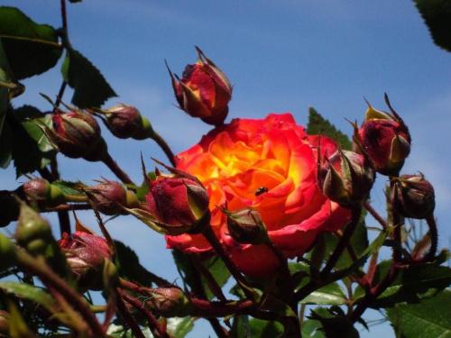 Z najlepszymi życzeniami urodzinowymi dla Henryka #natura #kwiat #kolor