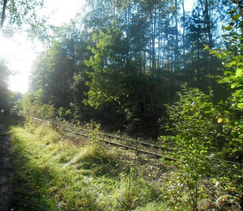 natura #rośliny #przyroda #natura #drzewa #las #lasy