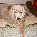 Dudinka XII 2009 #Dudi #Dudinka #pes #Psica