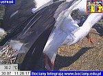 http://images49.fotosik.pl/171/1703d4524228124cm.jpg