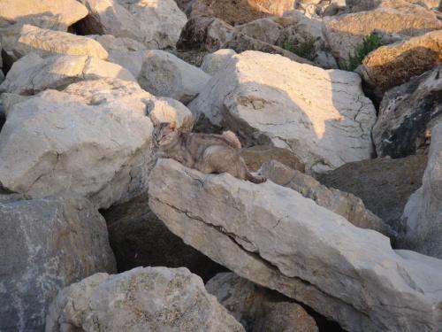 Kot to zwierze ktore mozna bylo prawie wszedzie zobaczyc na Sardynii