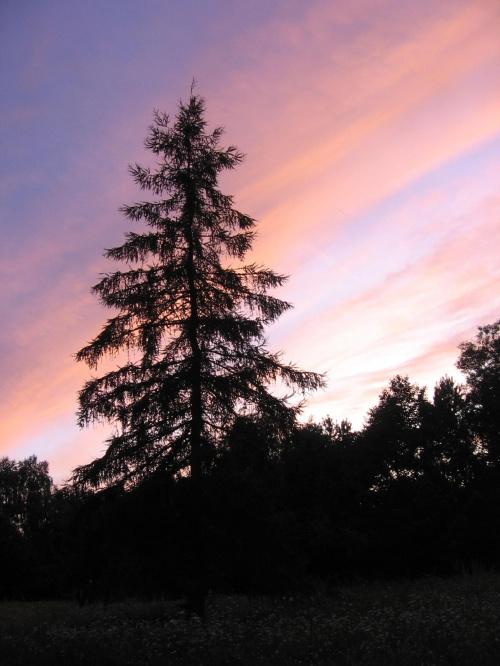 31.07.09 niebo o zachodzie było całe w różowych klorach