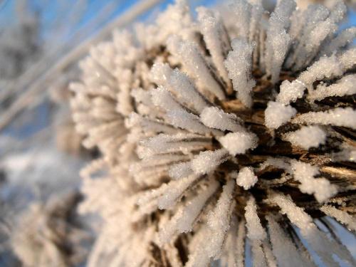 Szadź. #śnieg #mróz #lód #zima