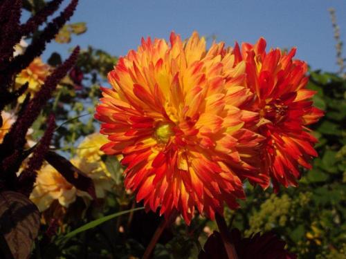 #kwiat #ogrod #natura #niebo