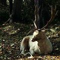 #zwierzę #daniel #las