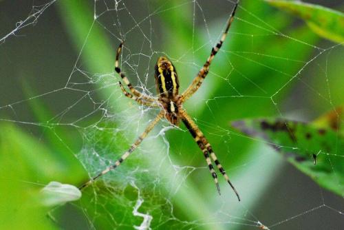 Pająk i jego dzieło #ogródek #owady #przyroda #natura