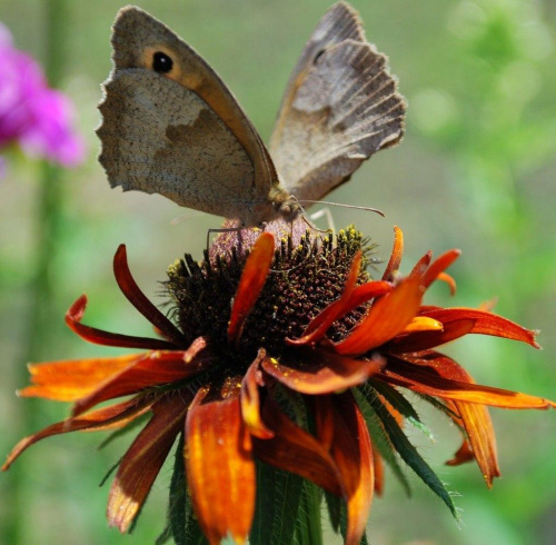 Razem weselej #kwiaty #ogródek #owady #przyroda #natura