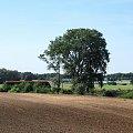 |20.08.09| SA106-019 jako pociąg 1127 do Bydgoszczy między Dąbrową Chełmińską a Ostromeckiem. #osobowy #pkp #Dąbrowa_Chełmińska #Nowy_Dwór #Ostromecko #Bydgoszcz #Chełmża #linia
