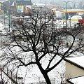 29 marca 2013 #Lipa #wegetacja #zima #wiosna #PoryRoku