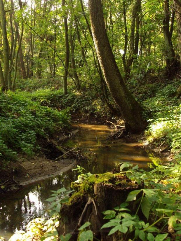Gdzie strumyk płynie z wolna... #las #strumyk #woda #natura