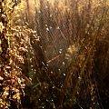 jesień nadchodzi.. #widok #jesień #pajęczyna