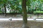 http://images49.fotosik.pl/200/7d13f6975443ec03m.jpg