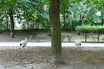 http://images49.fotosik.pl/200/b623f69465894b5cm.jpg