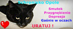 https://images49.fotosik.pl/216/a6fe12a0bd5dbb8b.png