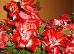 http://images49.fotosik.pl/234/502220ed1ad31555m.jpg
