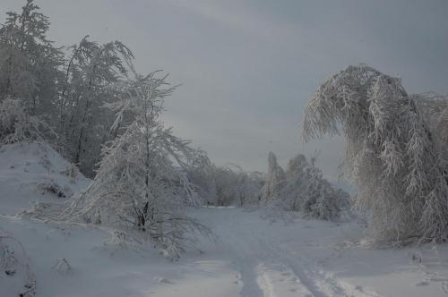 17.I.2010 Miękinia, piękna zima i gigantyczne mrozy.