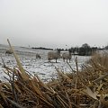 #milton #keyns #MiltonKeyns #owce #owca #słoma #pole #SniegZOwcami