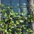#przyroda #kwiaty #okna #architektura