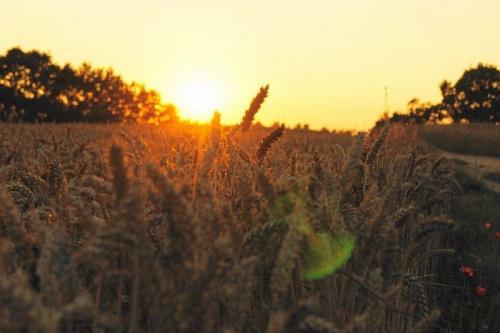 #zborze #przyroda #natura #zachód #ZachódSłońca #widok #karajobraz #wakacje #lato