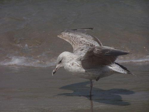 Kołobrzeg 2010 #morze #mewa #łabędź #plaża #piasek #niebo