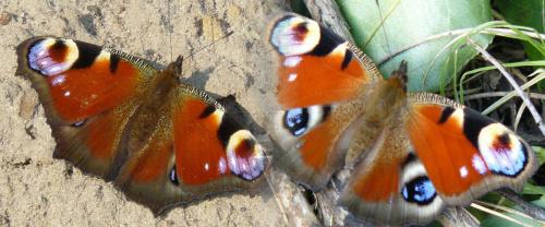 co to za motyl? #motyl