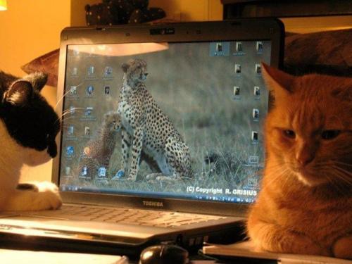 I okazało się co robią koty,gdy nikt nie widzi... #koty