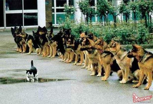 #kot #koty #psy #pies