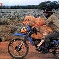 #owca #seks #farmer #motor #cross #owce
