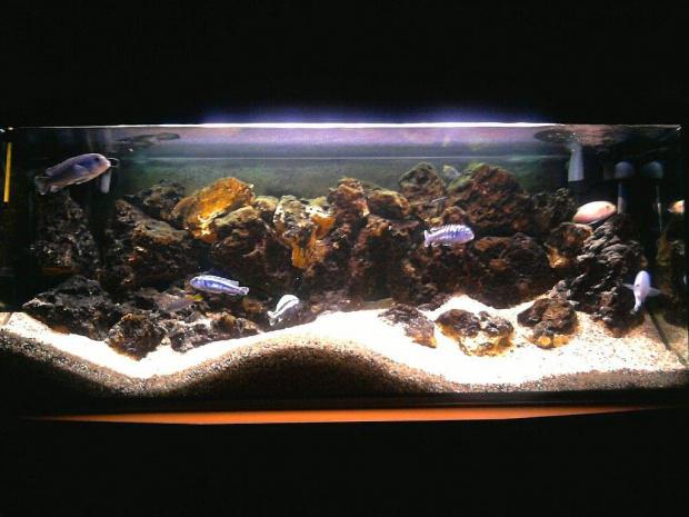 Malawi 240l Rok Po Zmianie Kamieni Ryby Zwierzęta Woda Akwarium