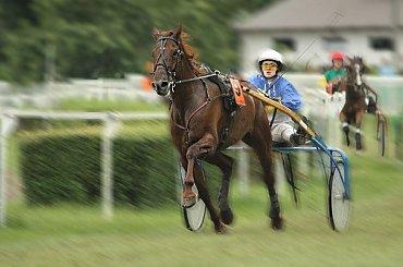 wyścigi #WyścigiKoni #konie #bryczki