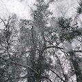 #zima #snieg #las