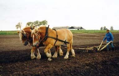 robota idzie jak burza #konie