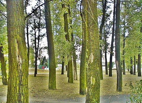#park #drzewa #kory #zieleń